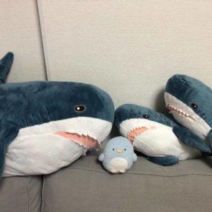 餌で迷うイケアのサメ