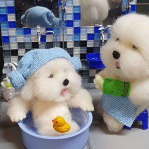 風呂に入るワンちゃん