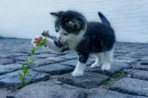 ネコの癒し画像
